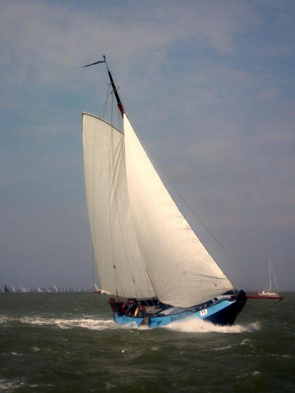 Visserman schokker Blauburd HT 2014